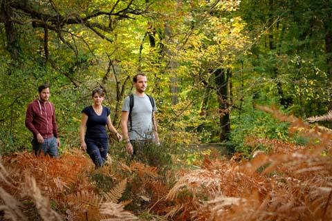 Forêt de Loches